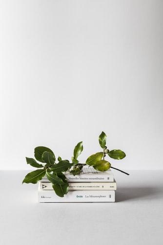 Bücher mit Blätterzweig